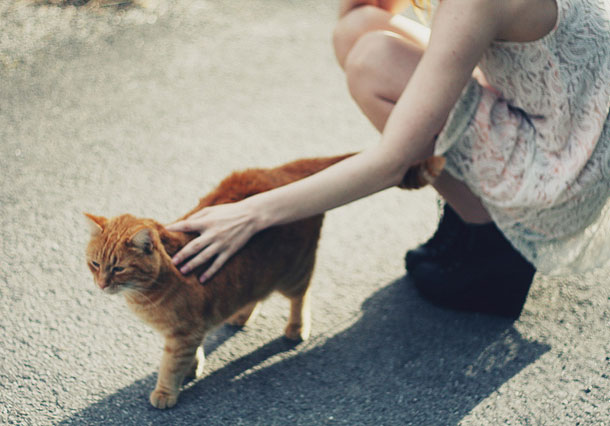 Девушка гладит котёнка